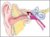 Chiropractic Helps in Prevention of Recurring Ear Infections